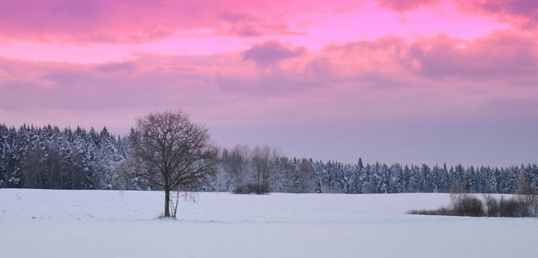 winter-morning-in-Latvia
