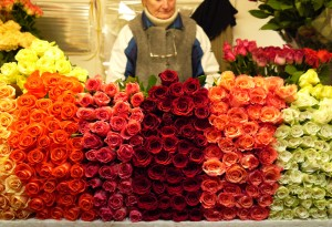Roses for sale at the 24 hour flower market in Vilnius, Lithuania