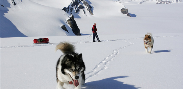 Skiing-with-husky-dogs