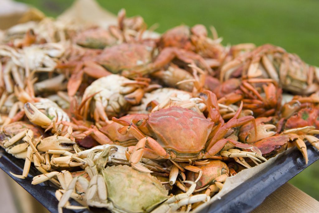 Crabs by Pia Britton