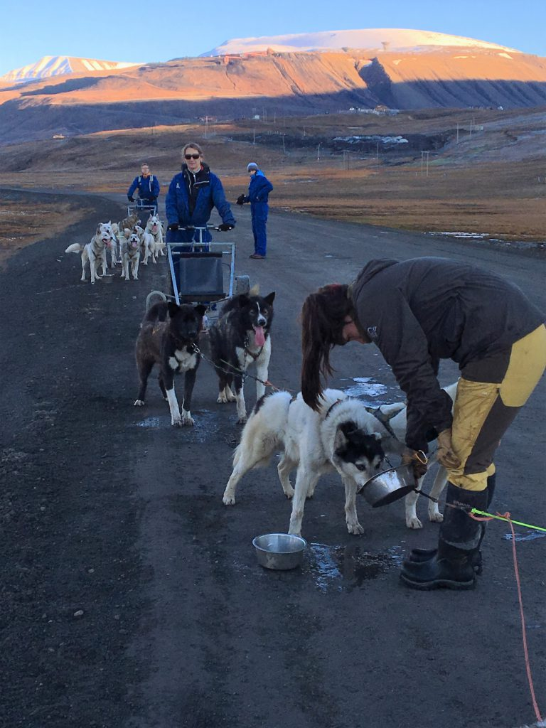 Dogsledding on wheels at Bolterdalen Trapper's Station