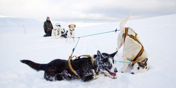 dogsledding dogsledding photovg 2 1000x667