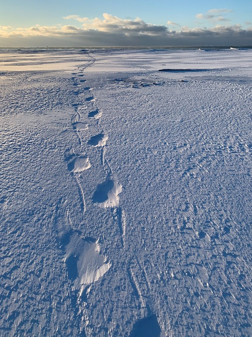 Polar bear tracks Isfjord Radio Toril Basecamp Hotel